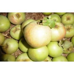 !NOUVEAU! Pomme d'Oli (par...