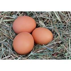 OEUFS frais de nos poules...