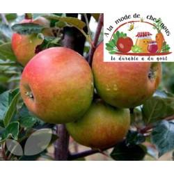 Pomme King Jonagold(par kg)...