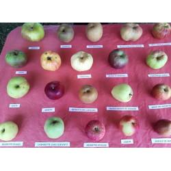 ! NOUVEAU ! Pommes en...